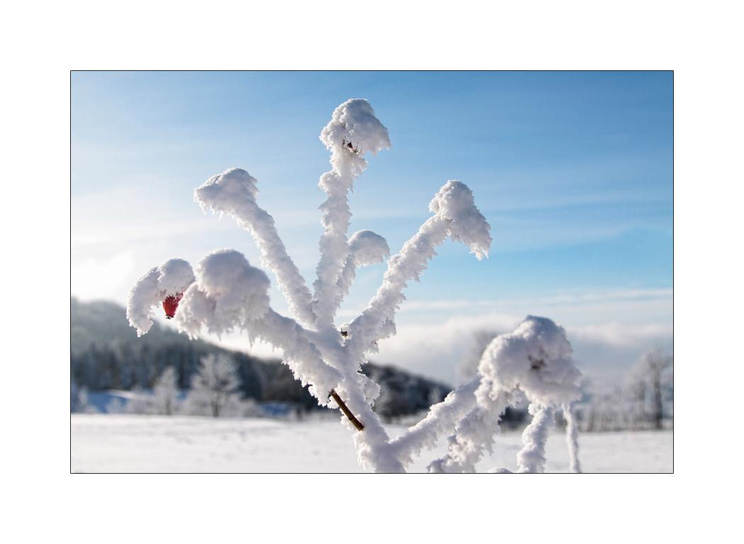 bizarre Winterimpression