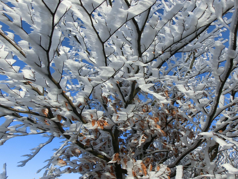 Bizarre Winterimpression im Taunus