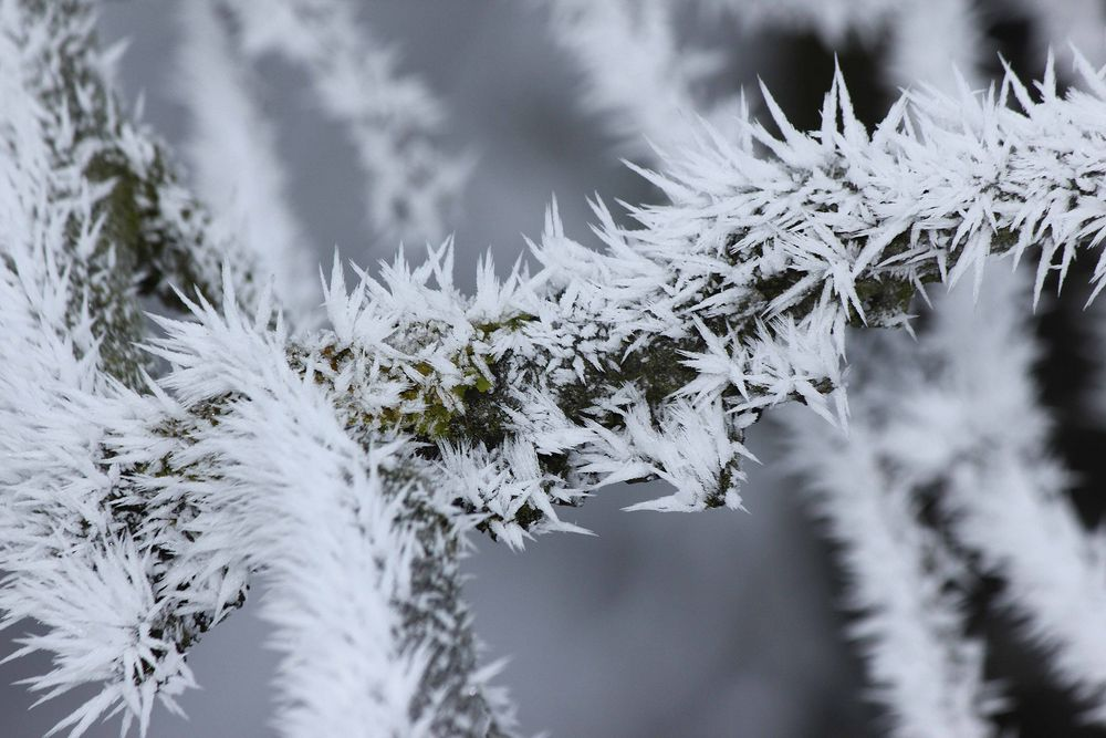 Bizarrer Frost