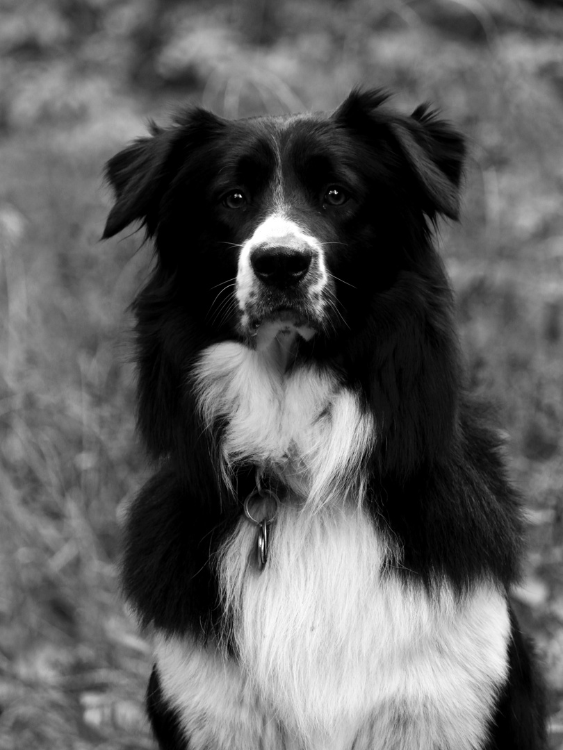 black and white beauty