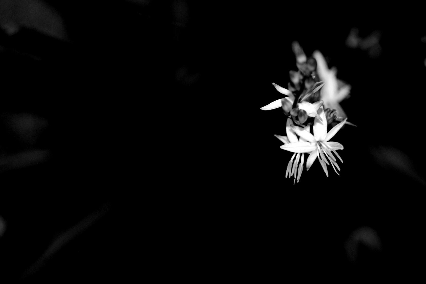 Black And White Flower Photo Image Plants Fungi Lichens