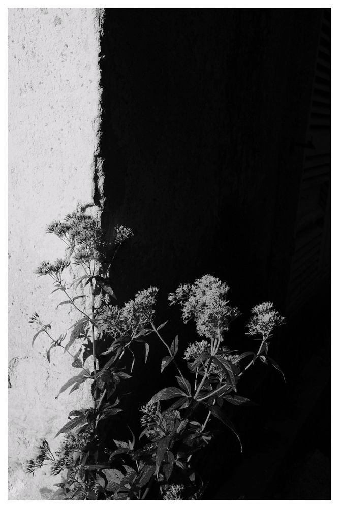 Black and White Things #1