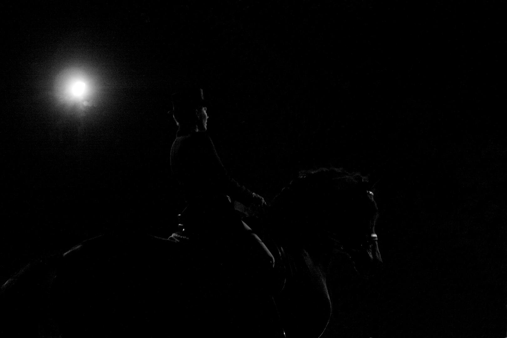 black beauty in the night