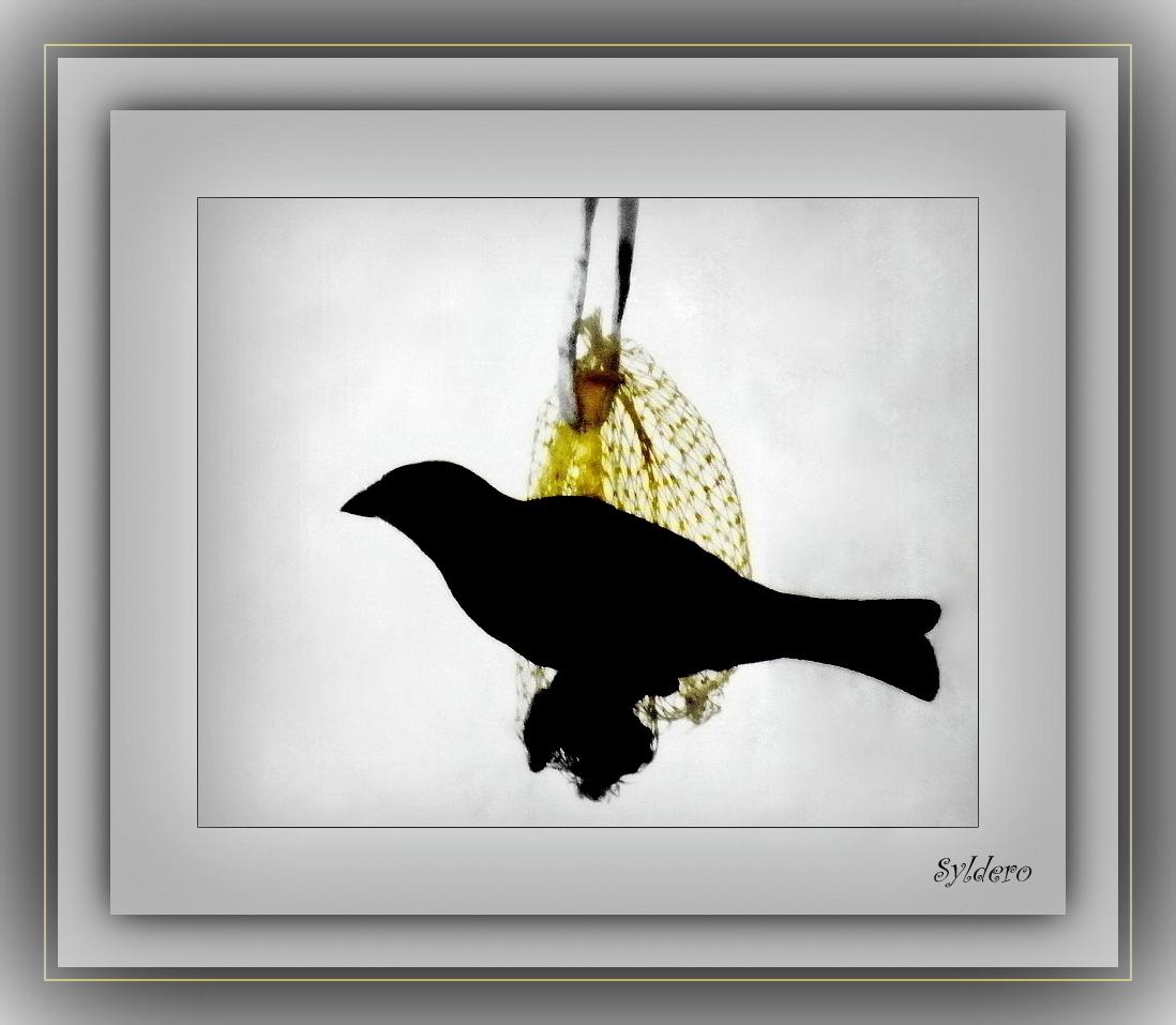 Black bird photo et image nature, animaux, oiseau Images