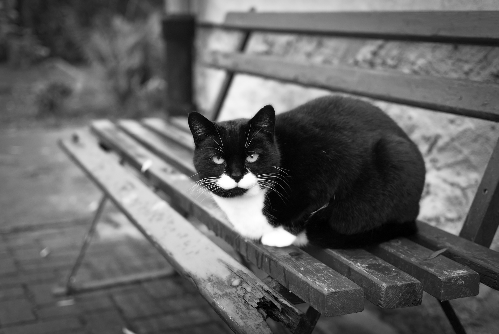 black cat II