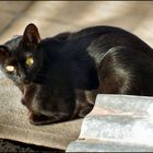 Black cat of the roofs,  friend of mine.