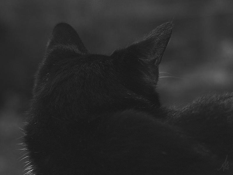 Black Cat's Ears