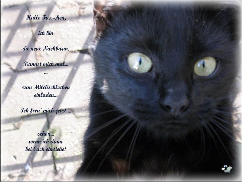 ... black cats - Füx-chen's Nachbarn ...