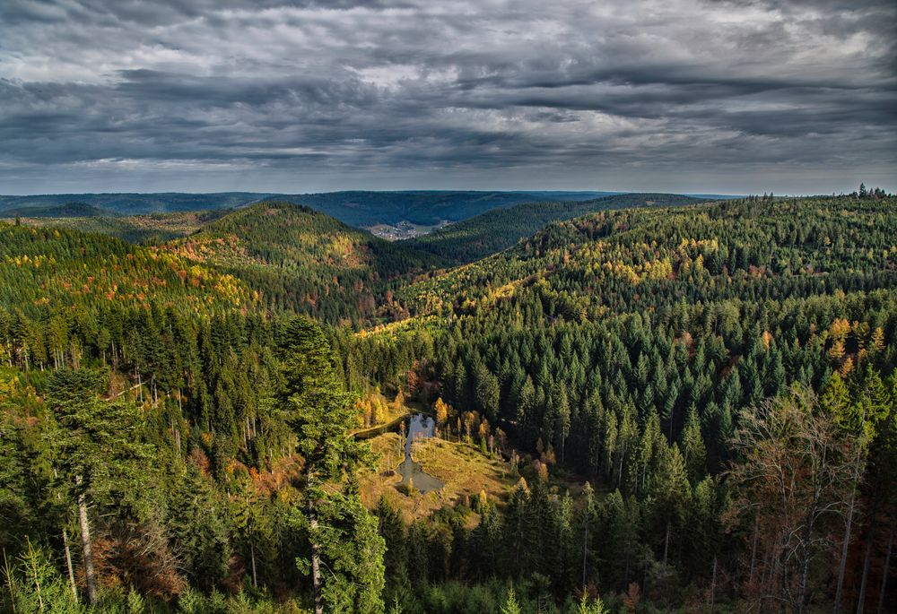 Black Forest at Kniebis Mountain