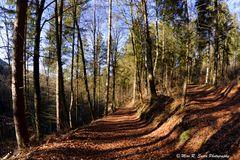 Black Forest Walk