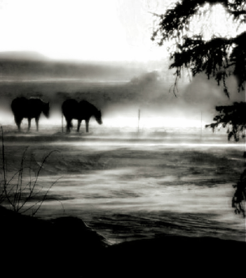 Black horses that never have masters.