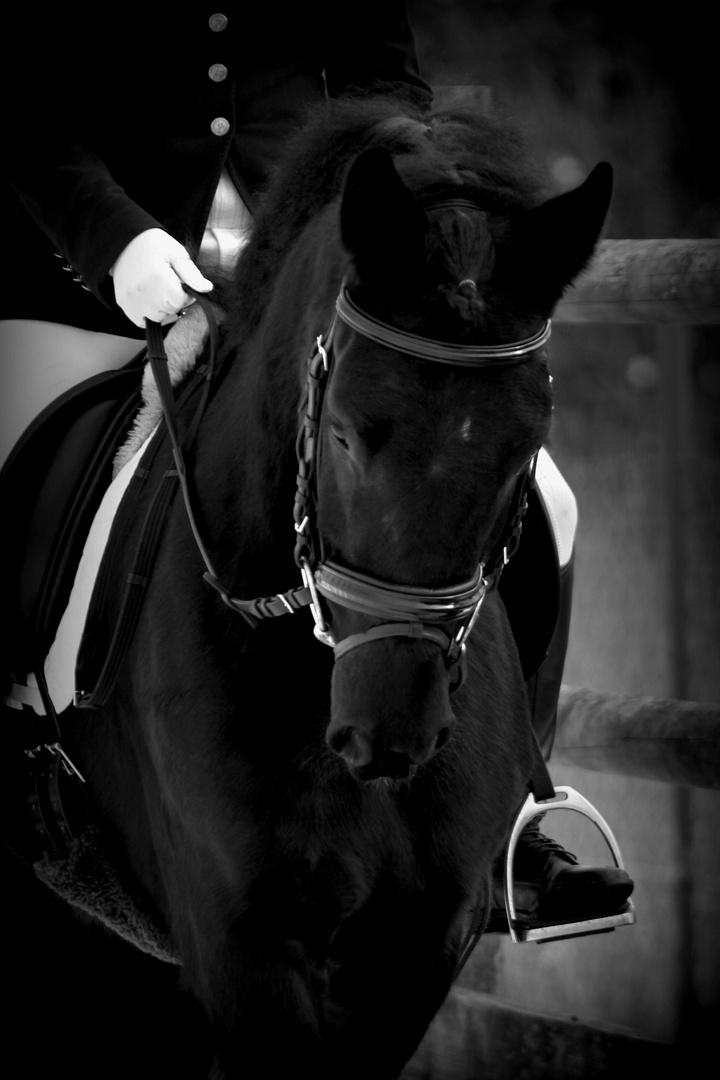 Black Jack Pferd