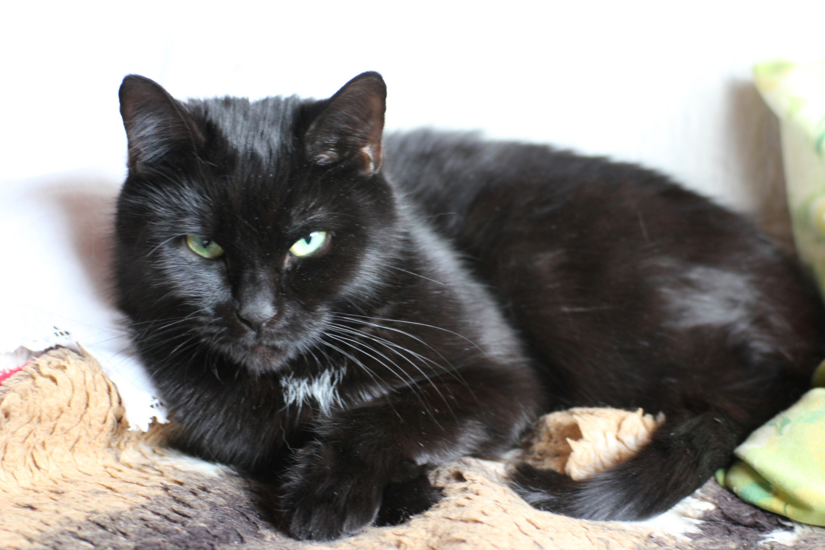 black panther foto bild tiere haustiere katzen. Black Bedroom Furniture Sets. Home Design Ideas