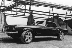 Black Pony
