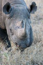 Black Rhino, ich bin der gefährliche!