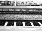 ..black & white...