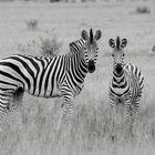black - white - black - white