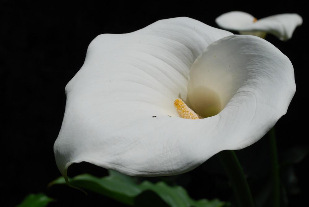 BLACK & WHITE IN COLOR