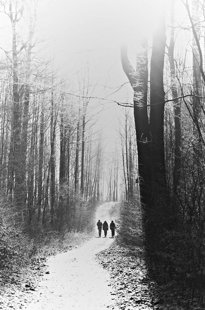 black & white winter forest