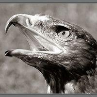 .blackbird.
