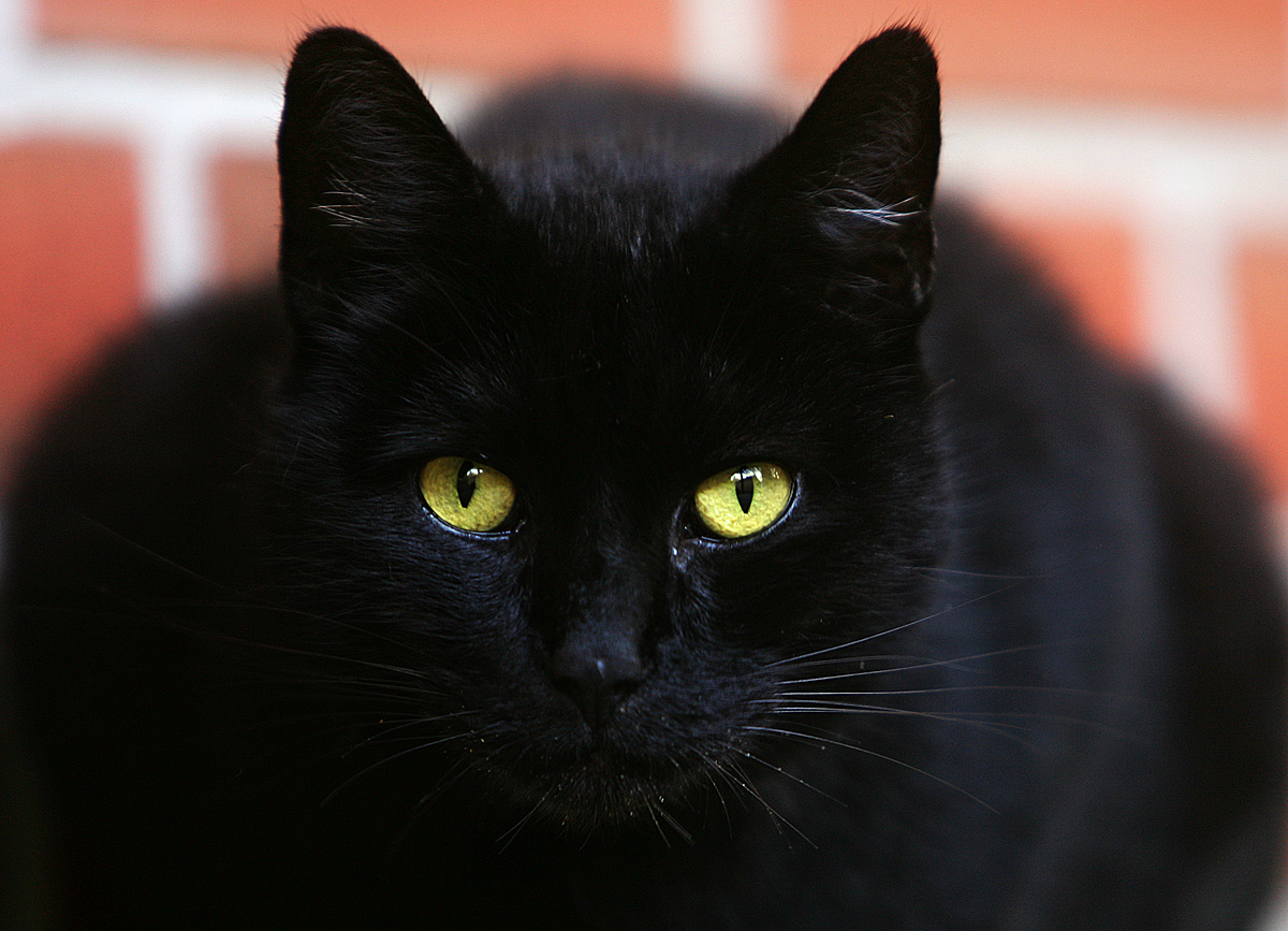 BlackCatYellowEyes
