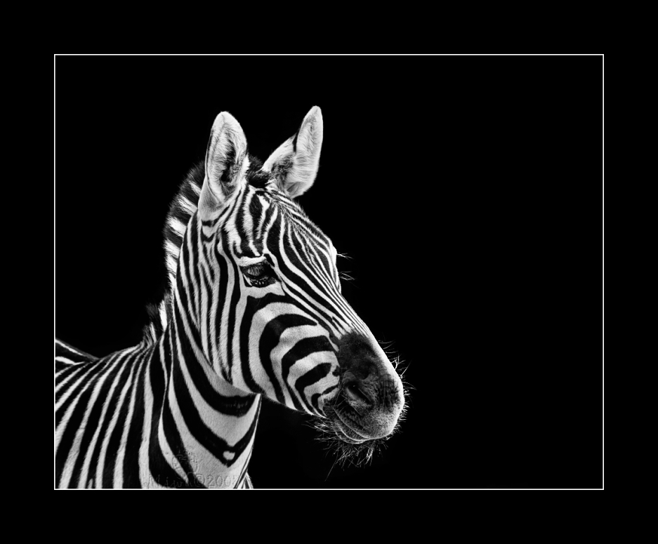 Black&White@
