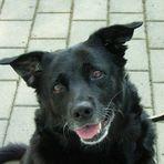 Blacky (1998-2009)