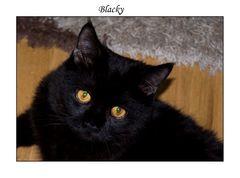 **Blacky**