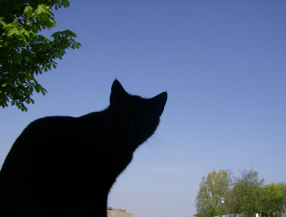 Blacky The Black Cat Of Black-White-Castle