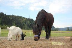 Blacky und Moritz ......