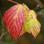Blätter..