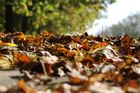 Blätter am Boden