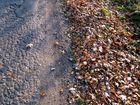 Blätter am Wegrand