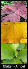 Blätter-Ampel