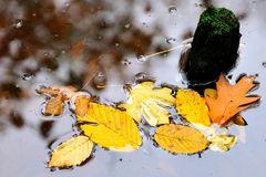 Blätter auf dem Teich