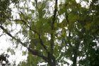Blätter Blues