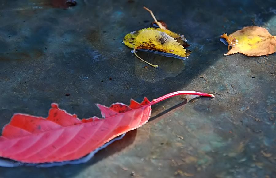 Blätter fallen...