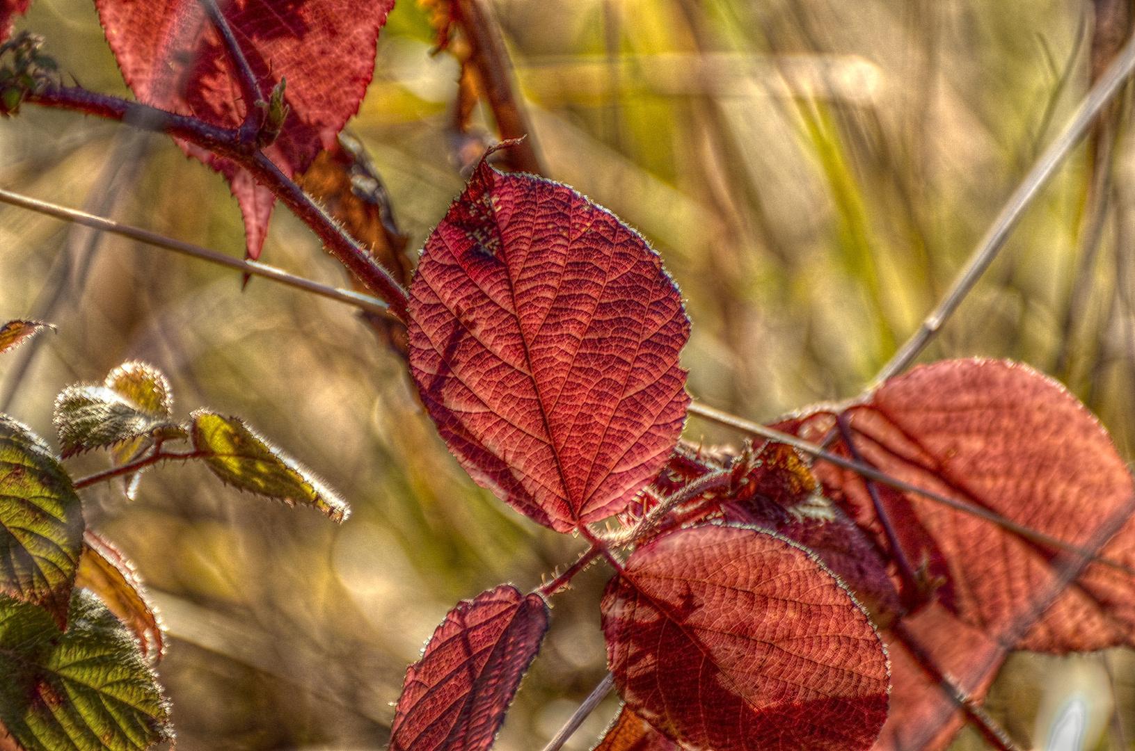 Blätter HDR