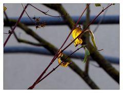 Blätter hinterleuchtet