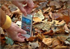 Blätter-i-Fotografie