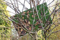 Blätter im Baum