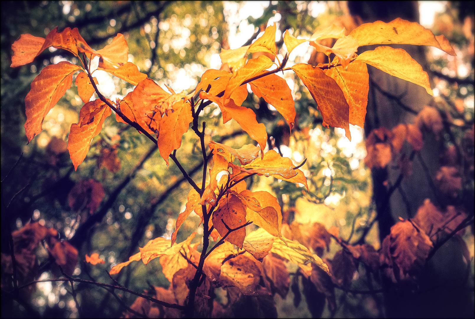 blätter im herbst foto  bild  wald bäume baum bilder