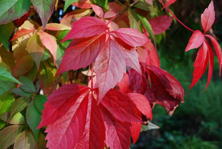 Blätter im Herbst. Kritik bei allen Bildern erwünscht :)
