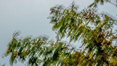Blätter im Herbstwind . Ammersee, Herrsching, Bayern