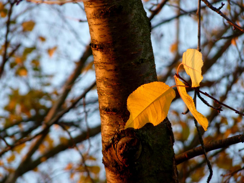 Blätter im Licht