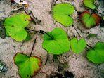 Blätter im Sand
