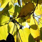 Blätter im Sonnenlicht