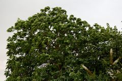 Blätter im Sturm