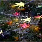 Blätter im und unter dem Eis....