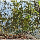 Blätter im Weiher